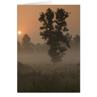 Early morning, rising sun and ground fog card