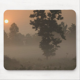 Early morning, rising sun and ground fog mouse mat