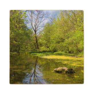 Early Spring Along Creek Near Nashville Wood Coaster