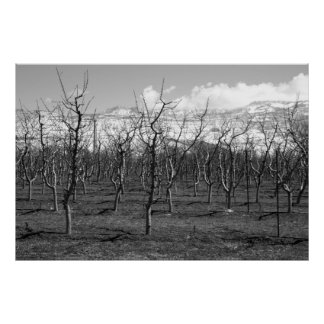 Early Spring Black and White Photo Poster
