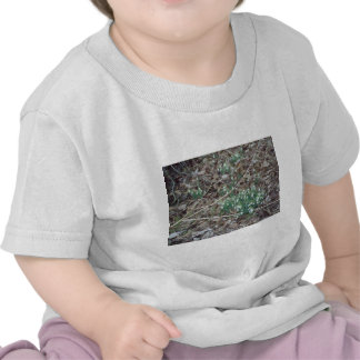 Early Spring flowers Tee Shirts