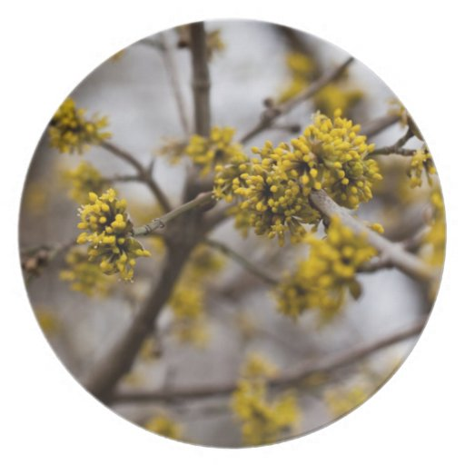 Early spring plate