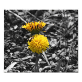 Early Spring Pollination Art Photo