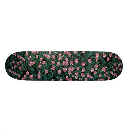 Early tulips, pink skate boards