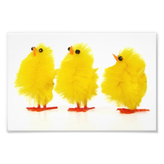 Easter baby chicks Photo Print