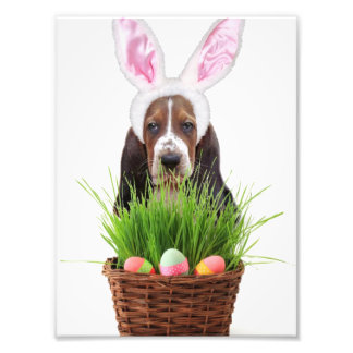 Easter Basset Hound dog Photographic Print