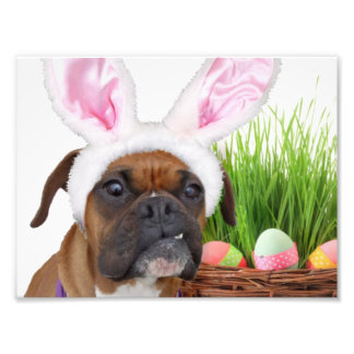 Easter boxer dog photographic print
