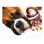 Easter Boxer puppy and Chick postcard