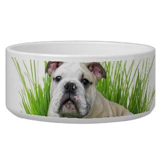 Easter bulldog pet water bowl
