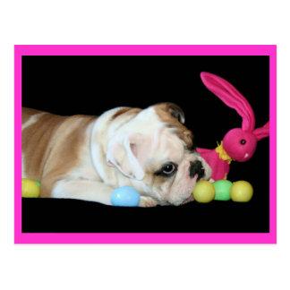 Easter Bulldog postcard