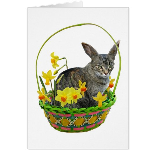 Easter Cat in Daffodils Card