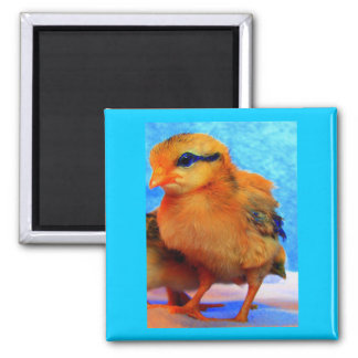 Easter Chick-A-Dee-Light Magnets
