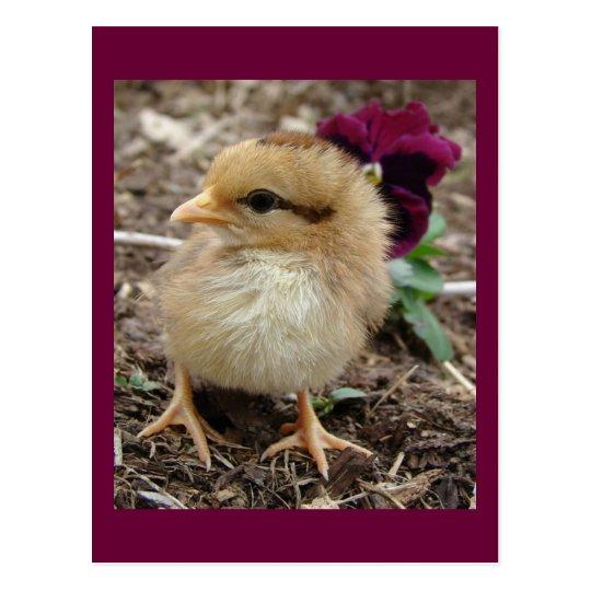 Easter Chick-A-Dee-Light Postcard