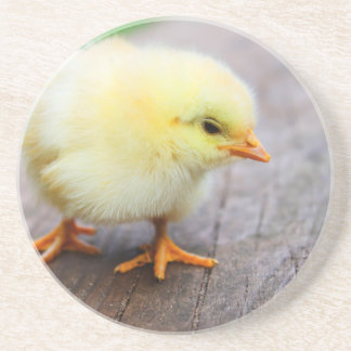 Easter Chick Coasters