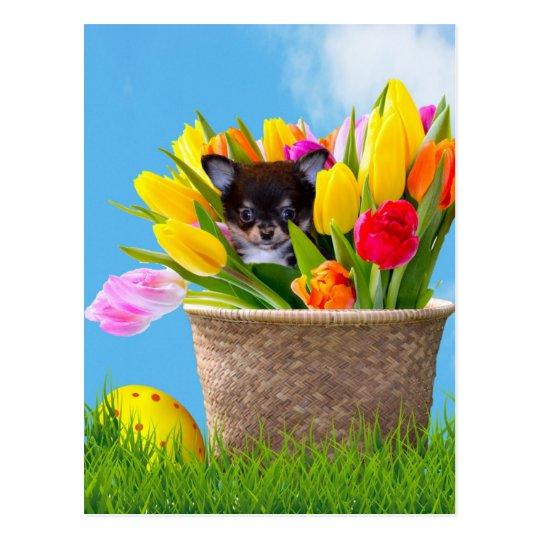 Easter Chihuahua dog Postcard