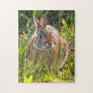 Easter Cottontail Rabbit in the Grass Jigsaw Puzzle