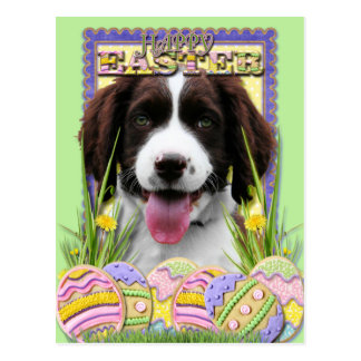 Easter Egg Cookies - English Springer Spaniel Postcard