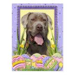 Easter Egg Cookies - Mastiff