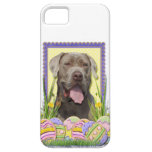 Easter Egg Cookies - Mastiff iPhone 5 Covers