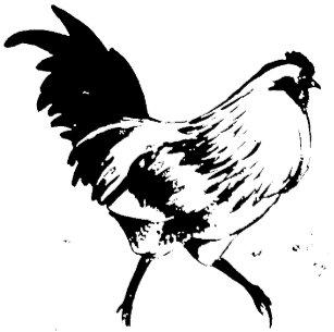 Easter Egger Rooster Stamp