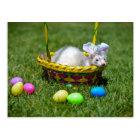 Easter Ferret Postcard