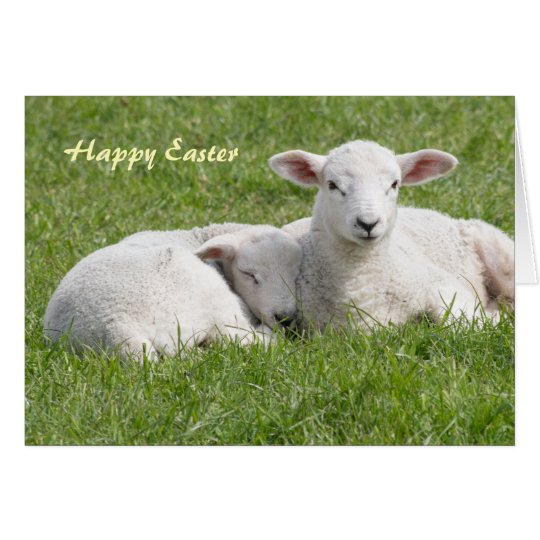 Easter Lamb greeting card