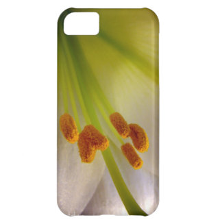 Easter Lily iPhone 5C Case