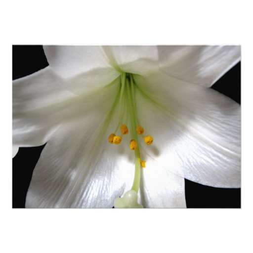 Easter Lily Custom Announcements
