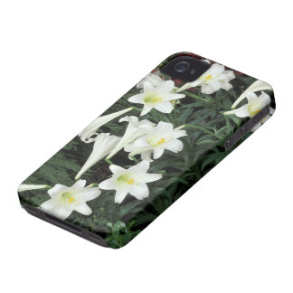 Easter Lily (Lilium regale) iPhone 4 Case