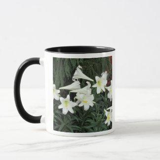 Easter Lily (Lilium regale) Mug