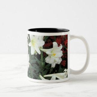 Easter Lily (Lilium regale) Two-Tone Coffee Mug