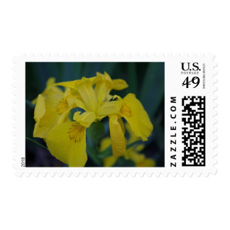 Easter Lily Postage stamp