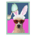 Easter Poodle Glamming It Up