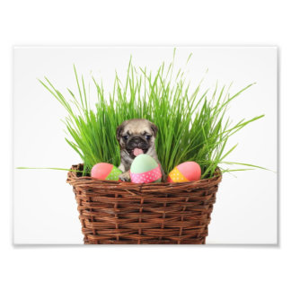 Easter pug puppy photographic print