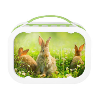 Easter Rabbits Lunch Box