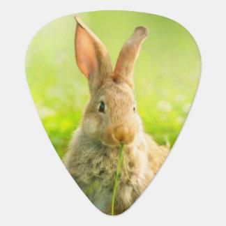 Easter Rabbits Plectrum