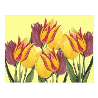 Easter Tulips Postcards