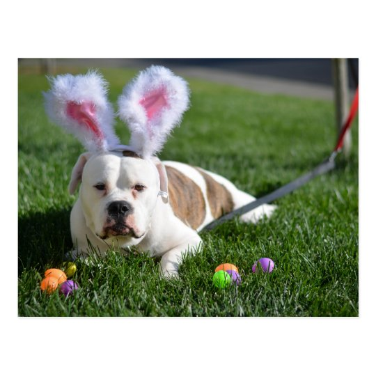 Easter Valley Bulldog Postcard