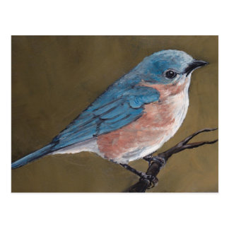 Eastern Bluebird Bird Art Postcard