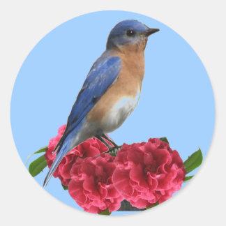 Eastern Bluebird Camellia Sticker