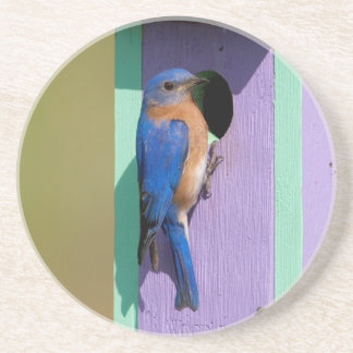 Eastern Bluebird Coaster