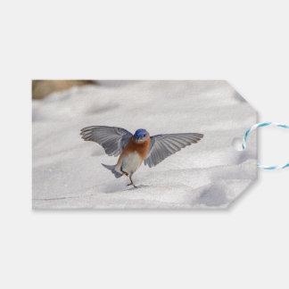 Eastern Bluebird dancing in the snow