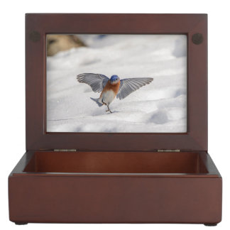 Eastern Bluebird dancing in the snow Memory Boxes