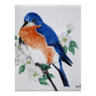 Eastern Bluebird in springtime Postcard