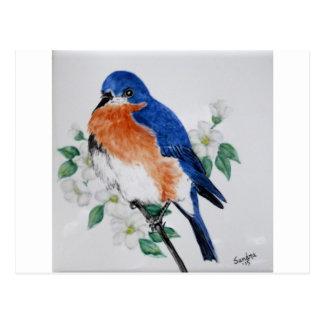 Eastern Bluebird in springtime Postcard