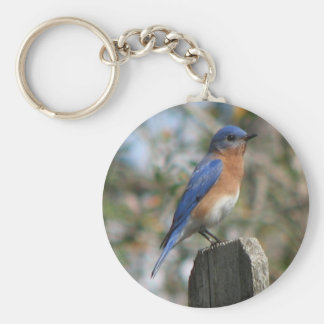 Eastern Bluebird Male Keychain