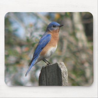 Eastern Bluebird Male Mousepad