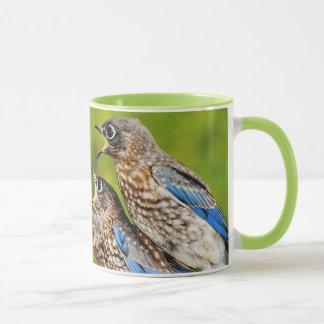 Eastern Bluebird Mug