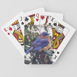 Eastern Bluebird on Holly Playing Cards
