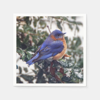 Eastern Bluebird on Ice Covered Holly Paper Napkin